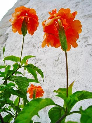 2011-08-19 2011-08-19 002 009.jpg