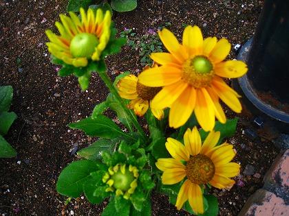 2011-08-19 2011-08-19 002 003.jpg