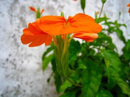 2011-08-19 2011-08-19 002 007.jpg
