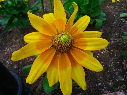 2011-08-19 2011-08-19 002 001.jpg