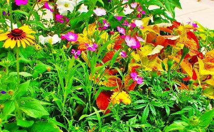 2011-07-25 2011-07-25 001 007.jpg