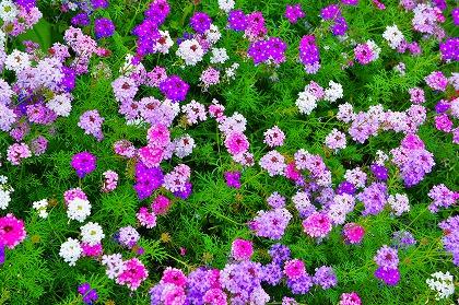 2011-07-25 2011-07-25 001 004.jpg