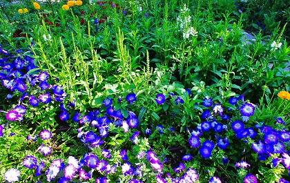2011-07-25 2011-07-25 001 002.jpg
