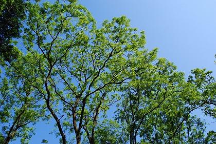 2011-06-11 2011-06-11 002 002.jpg