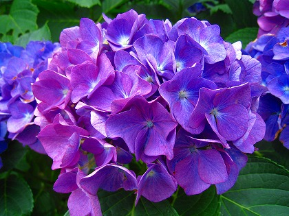 2011-06-12 2011-06-12 001 012.jpg