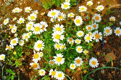 2011-05-15 2011-05-15 001 013.jpg
