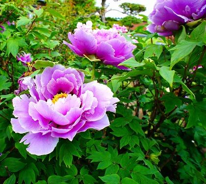 2011-05-14 2011-05-14 001 026.jpg