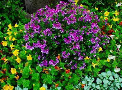 2011-05-05 2011-05-05 001 001.jpg