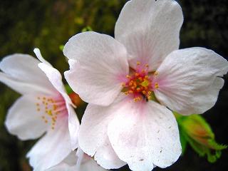 2011-04-10 2011-04-10 001 015.jpg