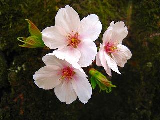 2011-04-10 2011-04-10 001 009.jpg
