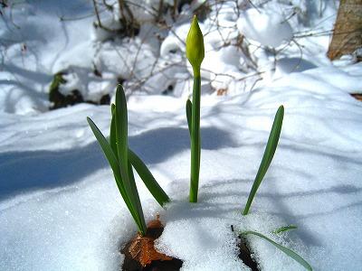 2011-03-27 2011-03-27 001 048.jpg
