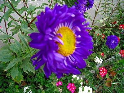 2010-09-01 2010-09-01 001 064.jpg