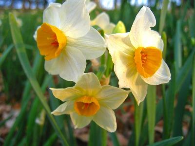 2011-02-05 2011-02-05 001 066.jpg