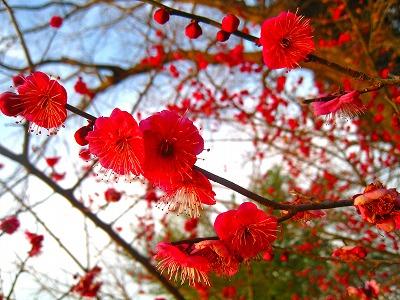 2011-02-05 2011-02-05 001 072.jpg