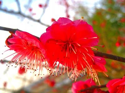 2011-02-05 2011-02-05 001 075.jpg
