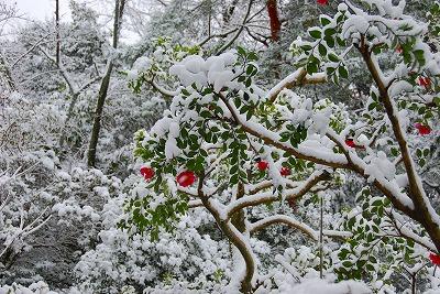 2009-12-19 2009-12-19 001 001.jpg