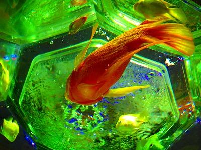 2010-12-25 2010-12-25 002 004.jpg