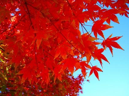 2012-11-10 2012-11-10 003 011.jpg