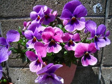 2012-04-04 2012-04-04 001 020.jpg