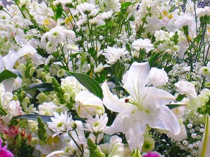 2012-05-04 2012-05-04 001 044.jpg