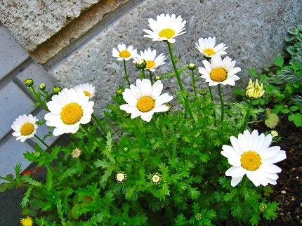 2012-04-04 2012-04-04 001 032.jpg