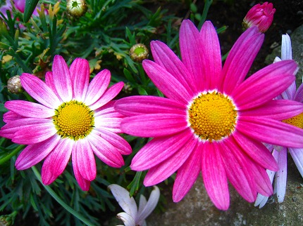 2012-04-04 2012-04-04 001 028.jpg