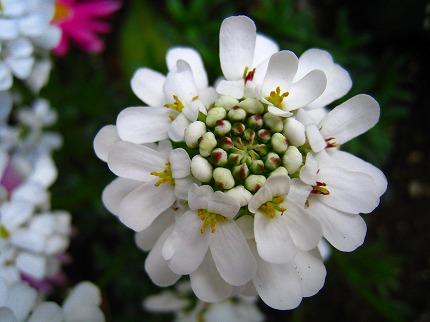 2012-04-04 2012-04-04 001 030.jpg