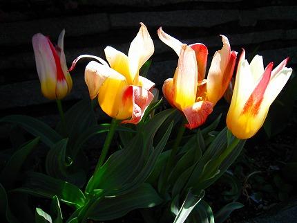 2012-04-04 2012-04-04 001 019.jpg
