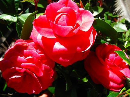 2012-04-04 2012-04-04 001 001.jpg
