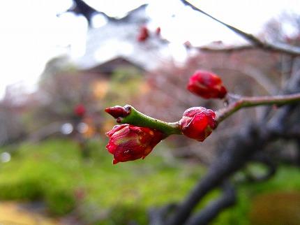 2012-01-22 2012-01-22 001 022.jpg