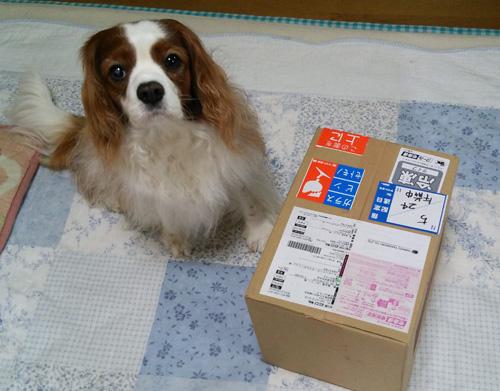 じゅんちゃんからの箱9th