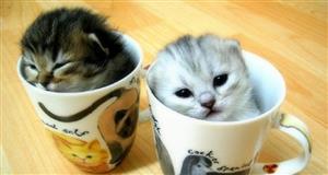 abicatcafe.jpg