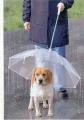 dogumbrella_02.jpg