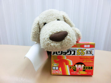 しっぷ犬!?