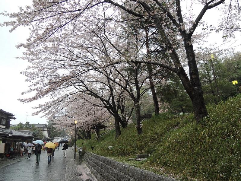 高台寺の桜並木