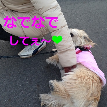 p005散歩