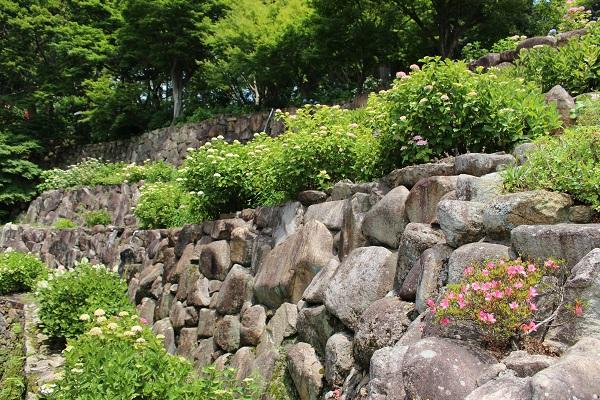 2015.06.25 柳谷観音(紫陽花)-2