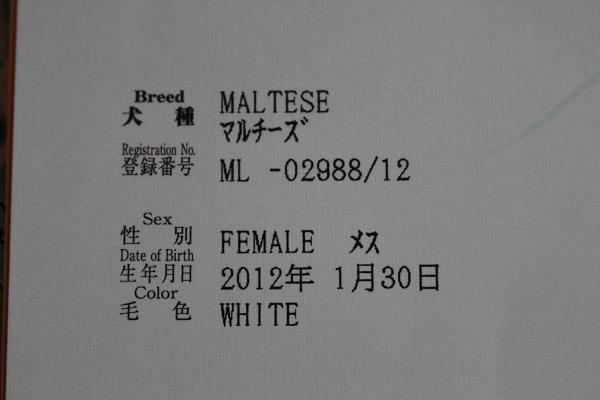 2015.06.26 ぱーるのルーツ-2