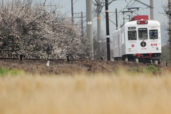 2009年2月 和歌山電鐵貴志川線 伊太祈曽~山東