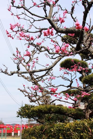 2009年2月 和歌山電鐵貴志川線 伊太祈曽