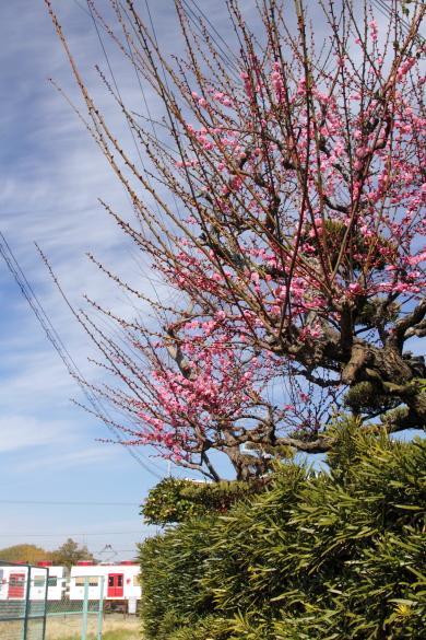 2015/2/21 和歌山電鐵貴志川線 伊太祈曽