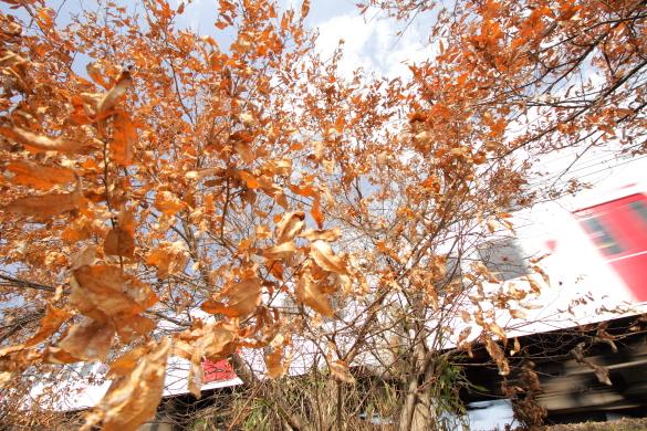 2015/2/28 和歌山電鐵貴志川線 甘露寺前~貴志