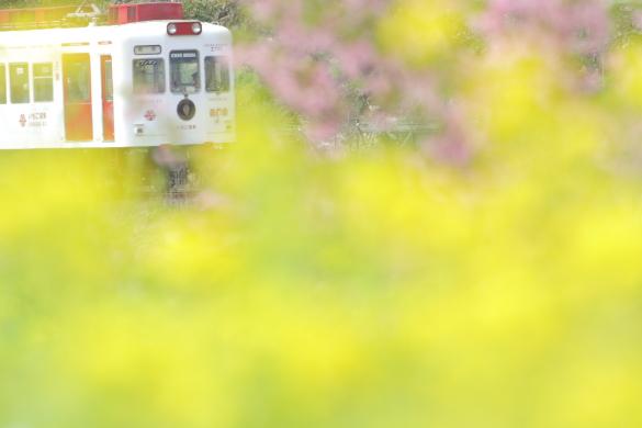 2015/3/21 和歌山電鐵貴志川線 吉礼~伊太祈曽