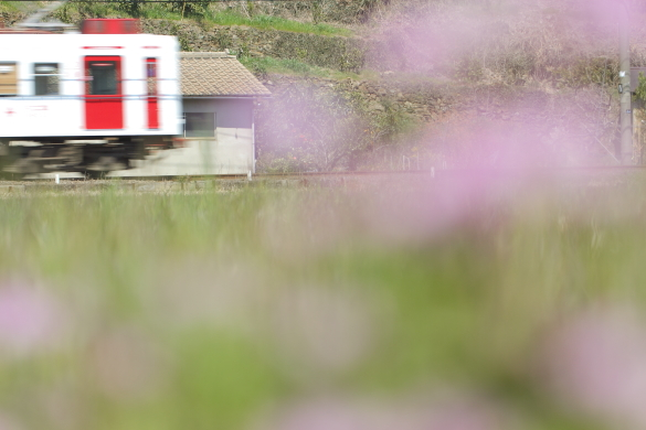 2015/3/28 和歌山電鐵貴志川線 吉礼~伊太祈曽