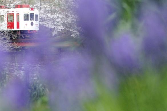 2015/4/3 和歌山電鐵貴志川線 大池遊園