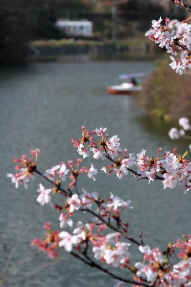 2010年4月 和歌山電鐵貴志川線 大池遊園