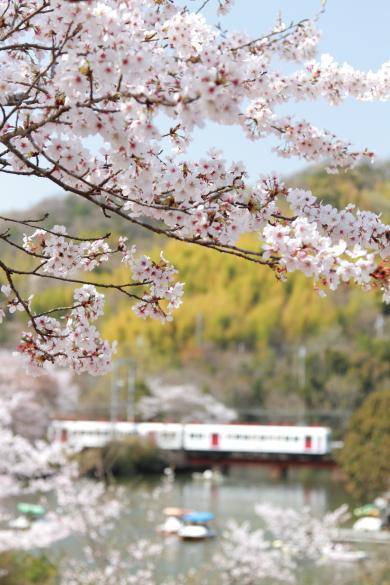 2011年4月 和歌山電鐵貴志川線 大池遊園