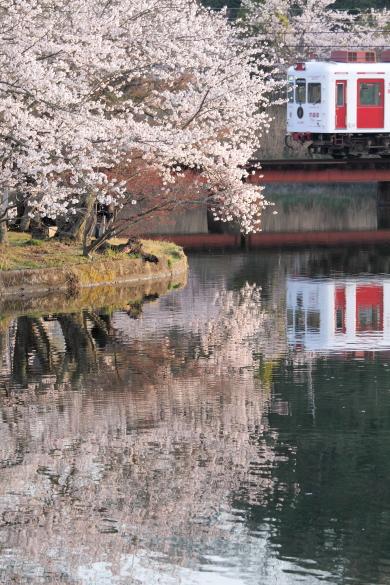 2013年4月 和歌山電鐵貴志川線 大池遊園