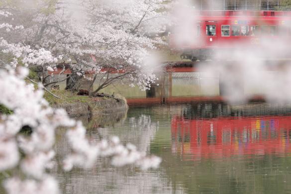 2014年4月 和歌山電鐵貴志川線 大池遊園