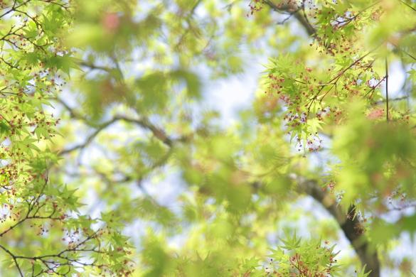 2015/4/12 和歌山電鐵貴志川線 大池遊園
